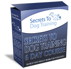 Train Your Fox Terrier In Just 6 Days